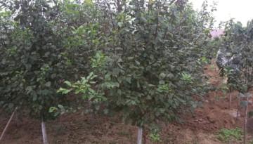 Самое время посадки плодовых деревьев!!