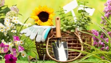 Гарантируем высокую декоративность растений на вашем участке круглый год.