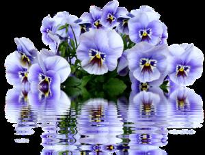 Цветники цена