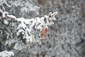Услуги по посадке крупномеров зимой