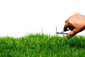 предлагает услуги стрижки газона в Москве