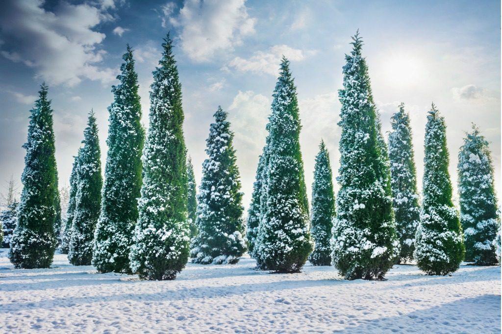 Зимняя посадка деревьев на заказ недорого